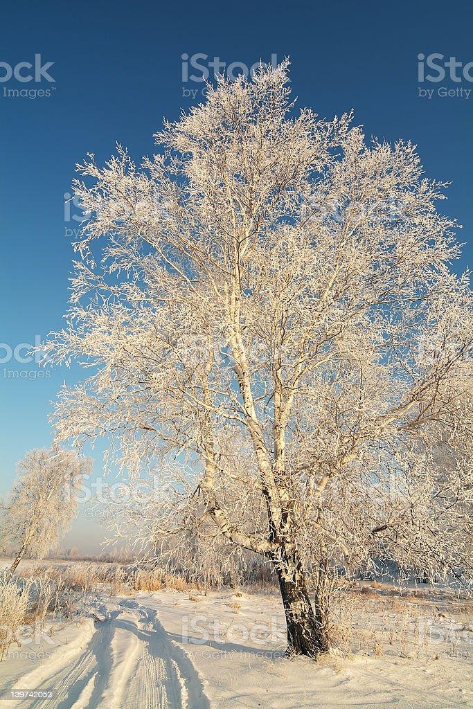 Russian winter royalty-free stock photo
