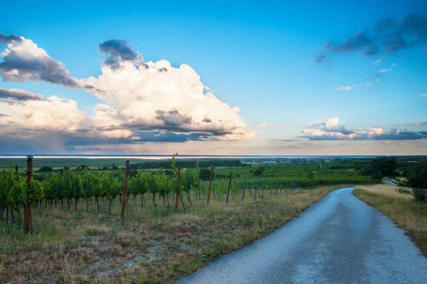 rost bin neusiedlersee mit tollen wolken und weingarten - burgenland stock-fotos und bilder