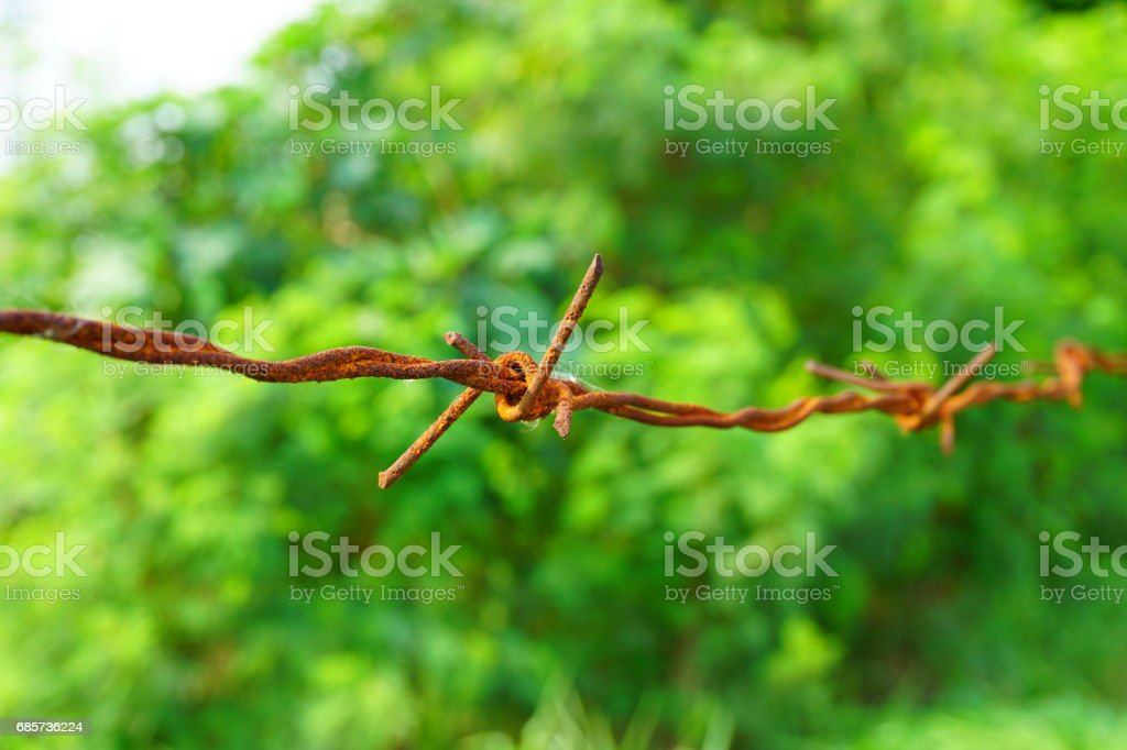 Rusted barbed wire foto de stock royalty-free