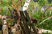 istock rustic background - an abandoned garden on the outskirts 1253711394