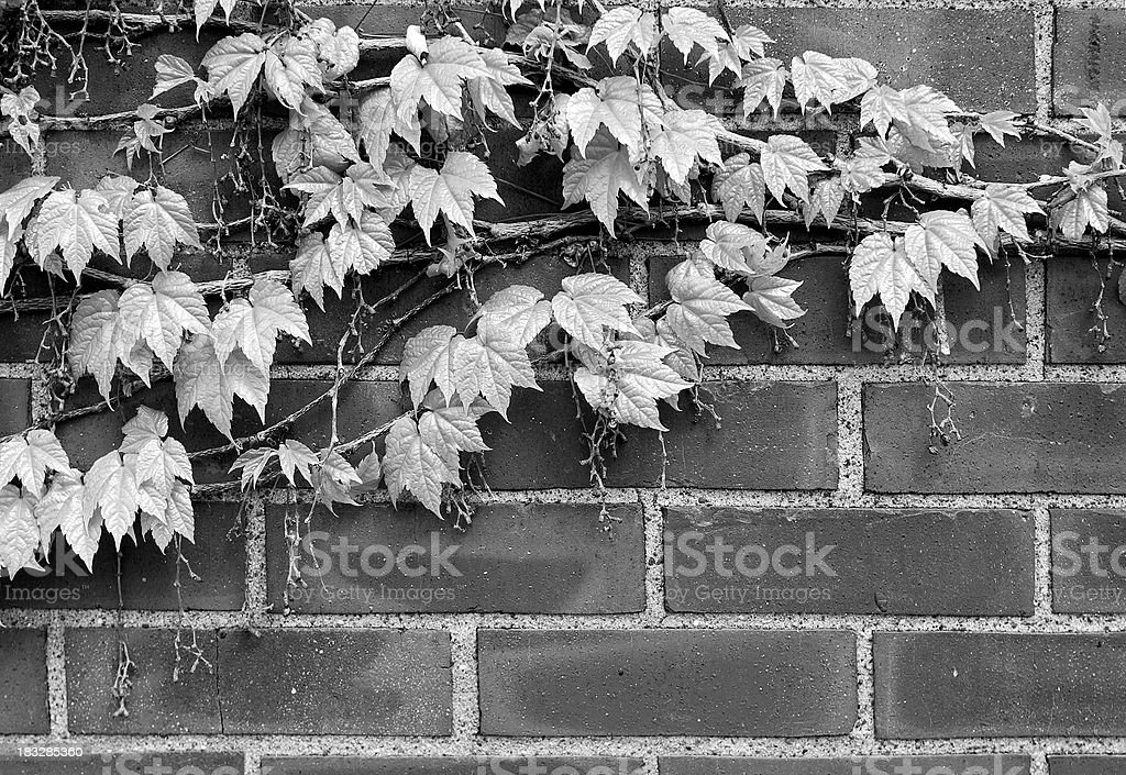 Rustic Background royalty-free stock photo