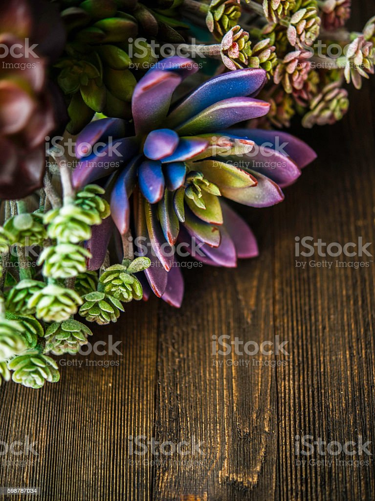 Rustic background with cacti and succulents border stock photo