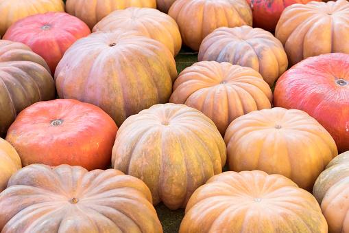 Rustieke Achtergrond Met Kleurrijke Pompoenen Closeup Oogst Thanksgiving Day Concept Stockfoto en meer beelden van Archiefbeelden