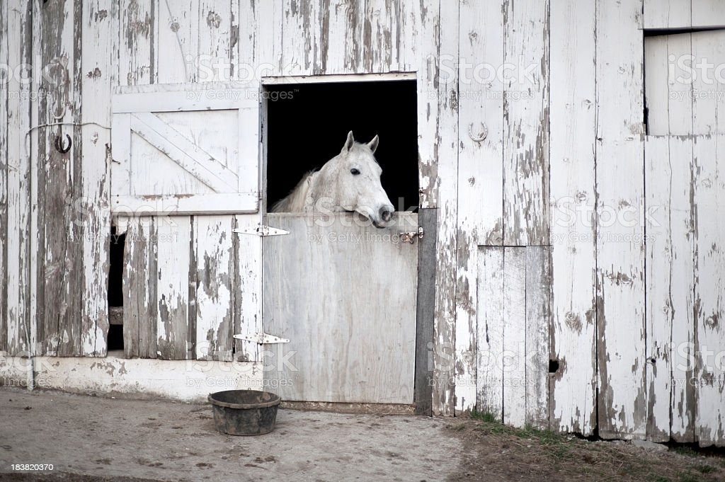 Rustic Barn Door With White Horse Stock Photo Amp More