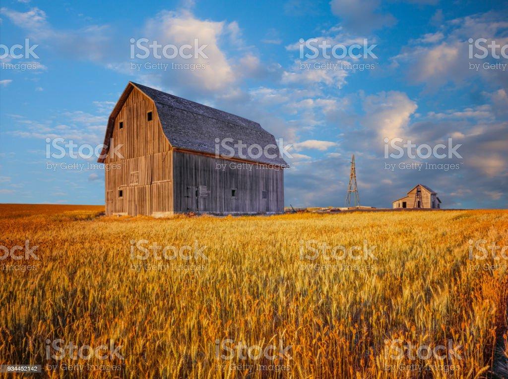 Rustikale Scheune in den Weizenfeldern von Idaho, USA – Foto