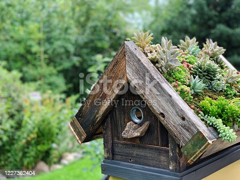 istock Rustic birdhouse in country garden planted with a succulent roof 1227362404