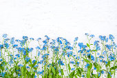 Rustic Border of blue forget me not flowers on white background. Beautiful Nature Spring Flower background with copy space. Top view. Flat lay. Template for Greeting card for mother's day, birthday