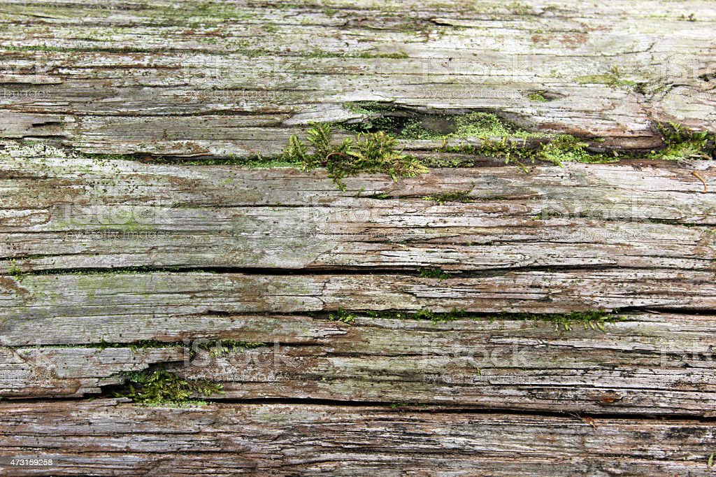 Rustic Decaying Log with Moss Growing as a Background stock photo