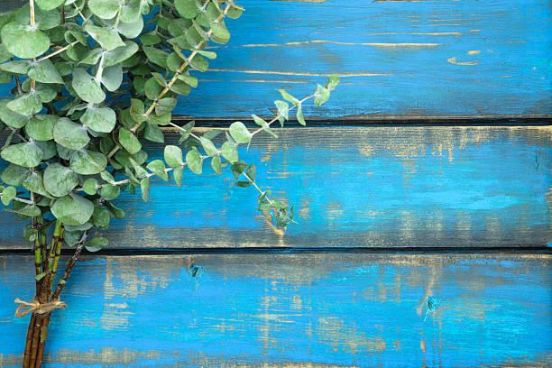 rustikale eukalyptus - eukalyptusbaum stock-fotos und bilder