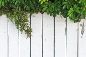 istock rustic fence for background 902662536