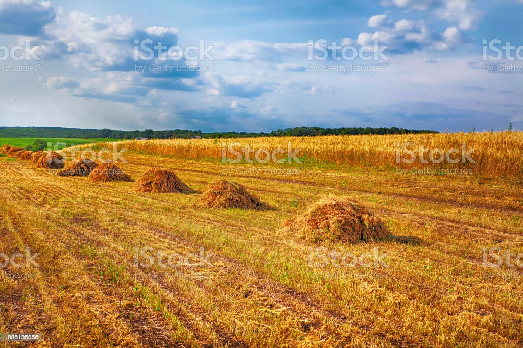 rustic field with hay stock photo