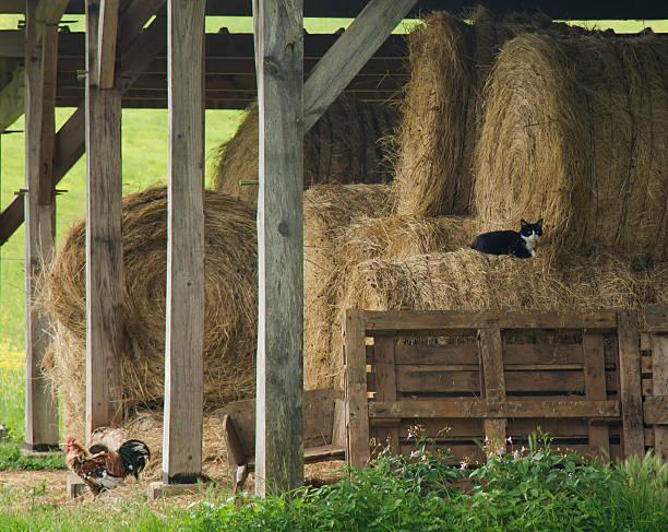 Rustic hay barn stock photo