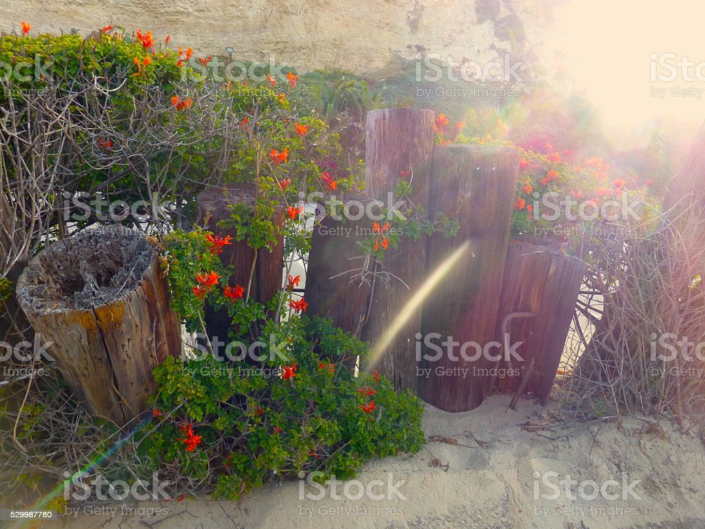 Rustic Hedge stock photo
