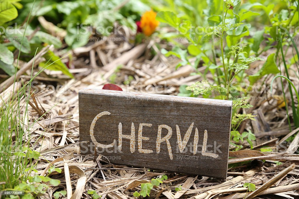 Rustic Herb and vegetable markers,chervil stock photo