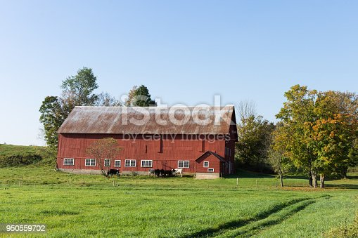 488912426istockphoto A Rustic Old Dairy Barn with Jersey Cows 950559702