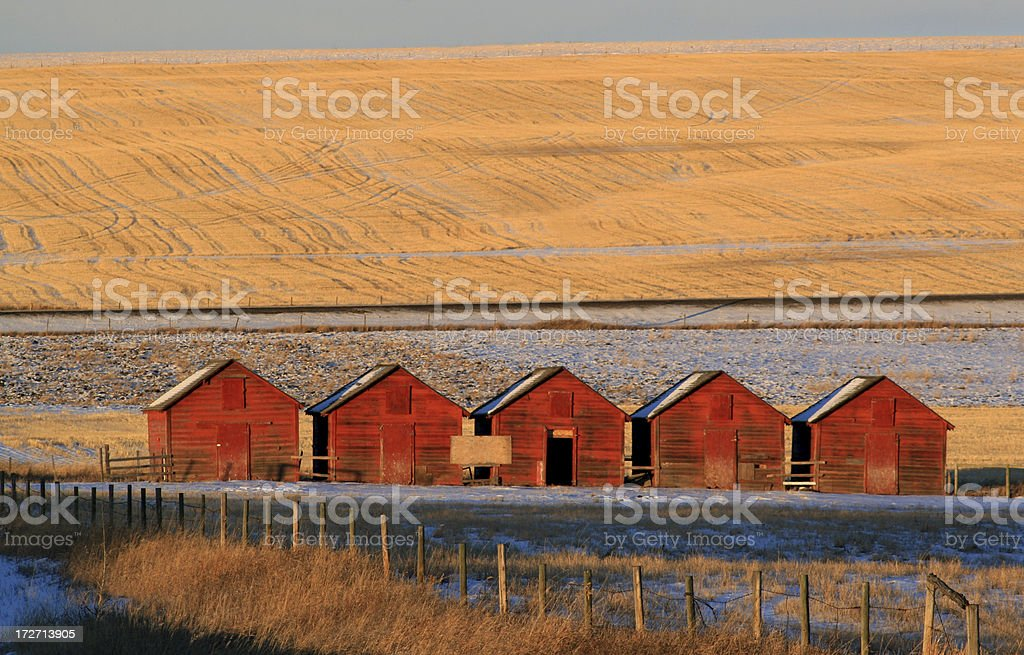 Rustic Red Sheds in Row on the Prairie in Alberta, Canada   royalty-free stock photo
