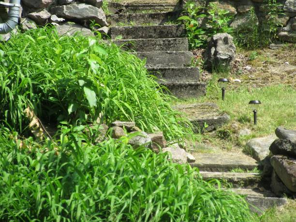 Rustic stone stairs surrounded by greenery stock photo