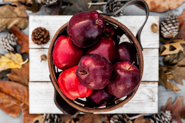 Rustic style of red apples in wooden basket on autumn background setup in a selective focus stock photo