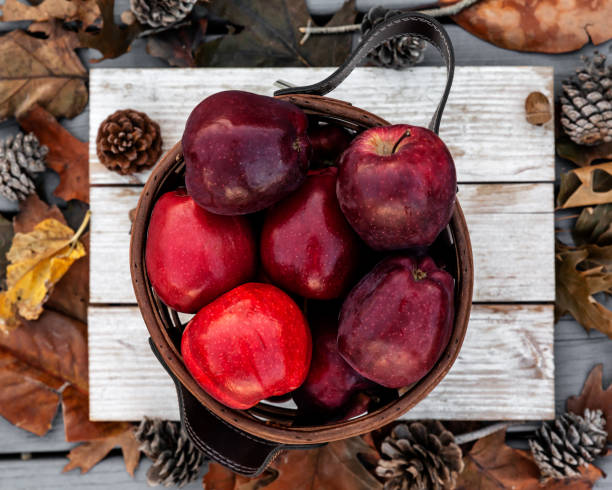 Rustic style of red apples on autumn background setup in a selective focus stock photo