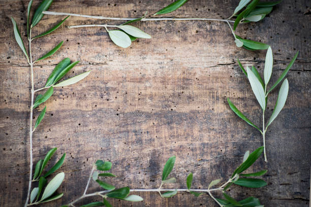 Rustic Summer Background With Olive Branches In An Antique Textured Tree And A Copy Space Stock