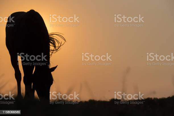 Photo of Rustic sunset scene with grazing horse