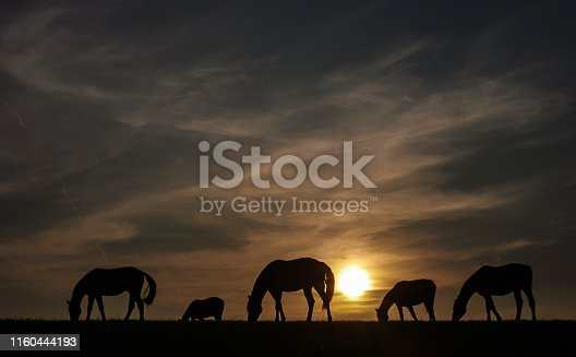Grazing horses in a rustic perspective view at sunset