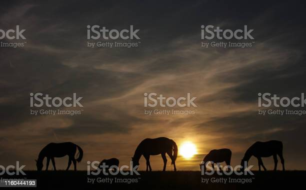 Photo of Rustic sunset view with grazing horses
