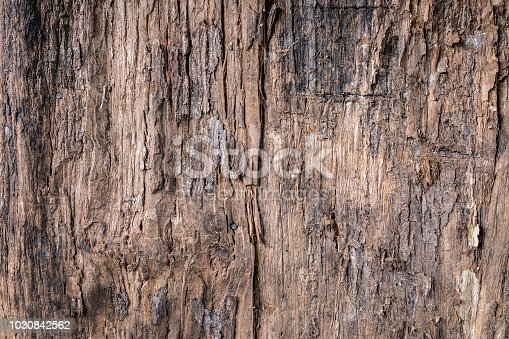 Rustic tree bark backgrounds