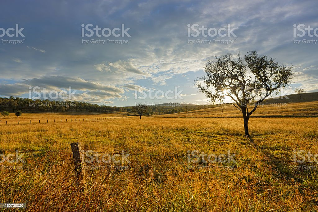 Rustic Tree stock photo