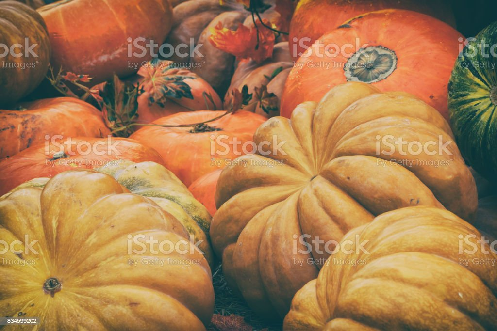Rustic vintage background with Different pumpkins. Thanksgiving Day concept stock photo