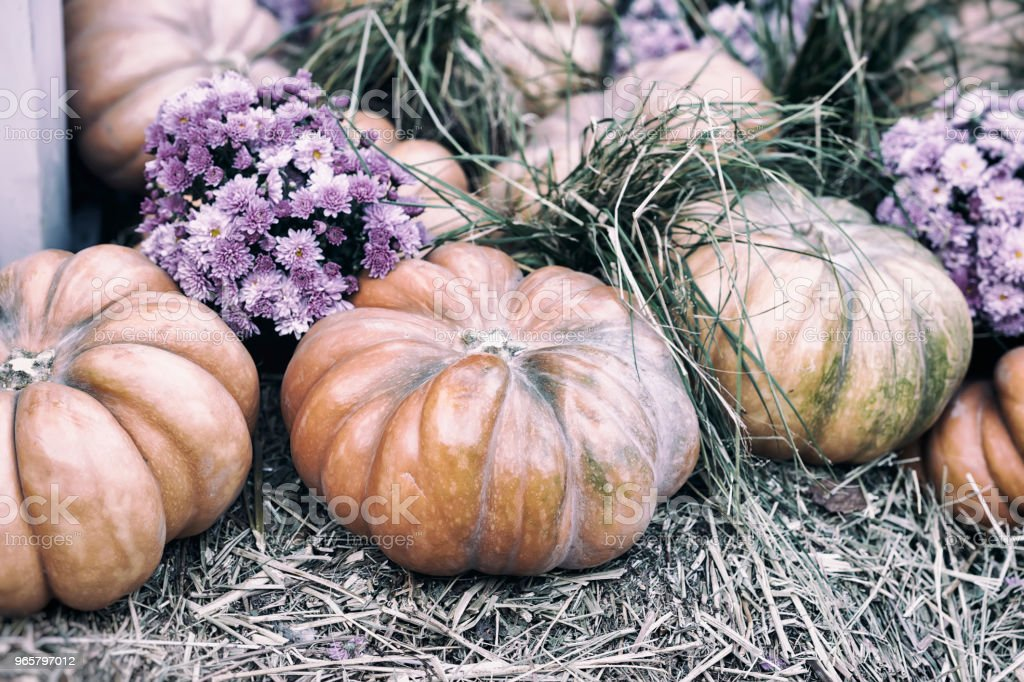 Rustic vintage background with organic pumpkins on dry straw and autumn flowers. Harvest concept. Symbol of holidays, especially on Thanksgiving Day - Royalty-free Agricultural Field Stock Photo