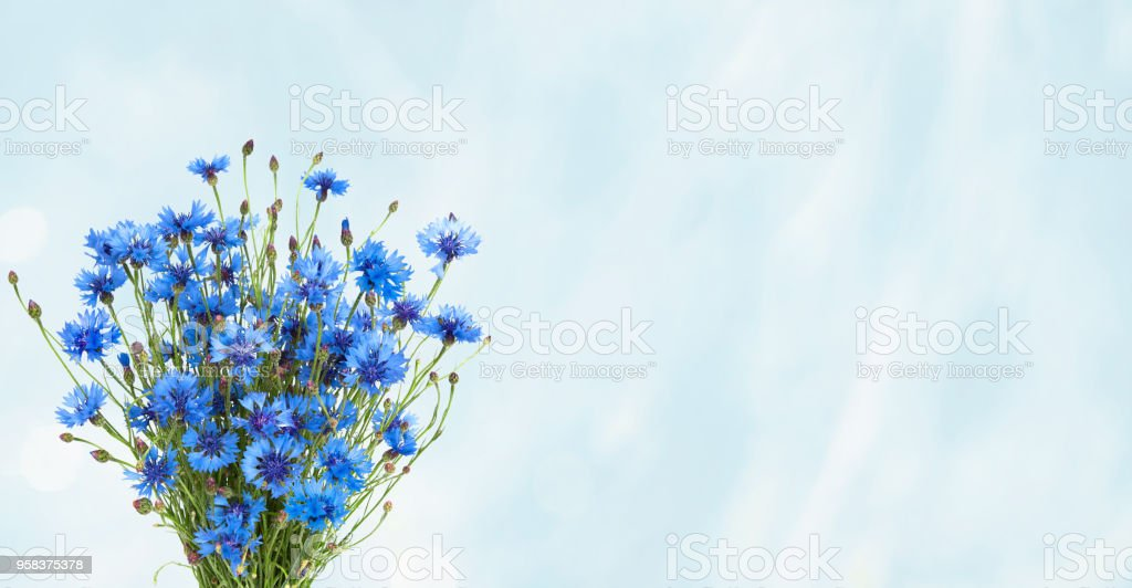 Rustic Wide Angle blue background with bouquet Blue Cornflower stock photo