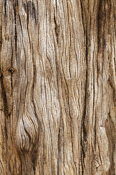 Royalty Free Tree Trunk Pictures Images And Stock Photos