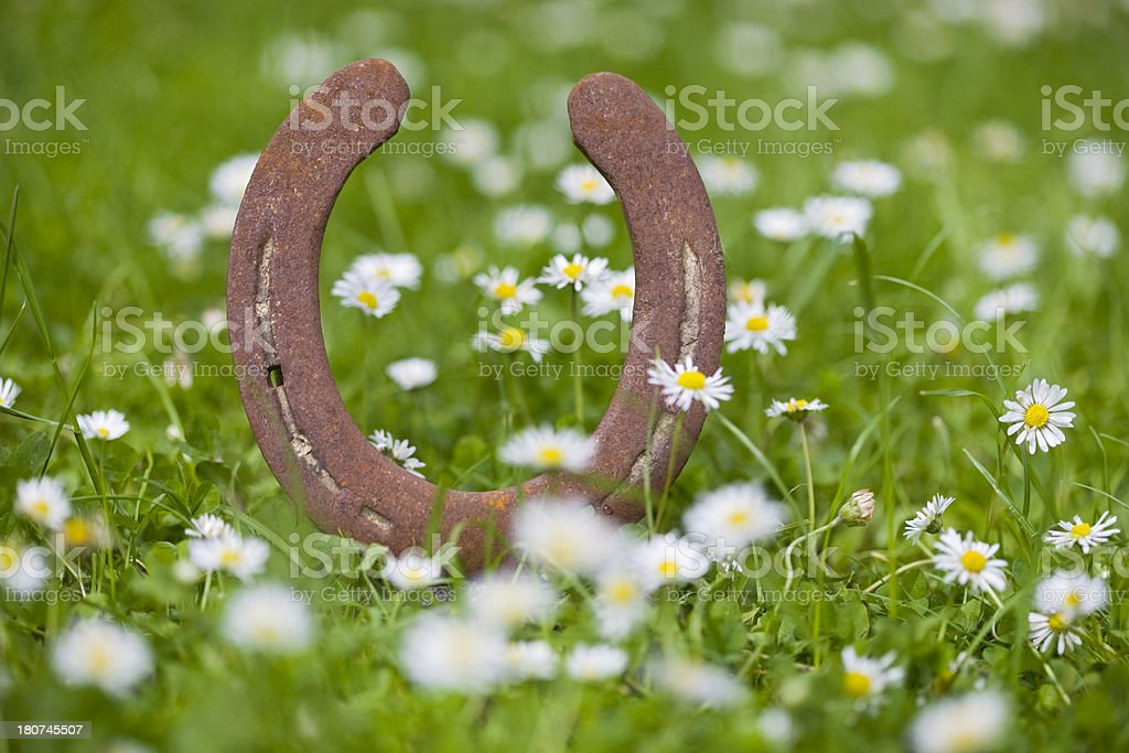 rusty and tender royalty-free stock photo