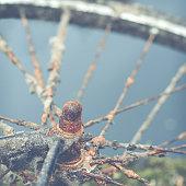 istock Rusty Bike By Water 474618670