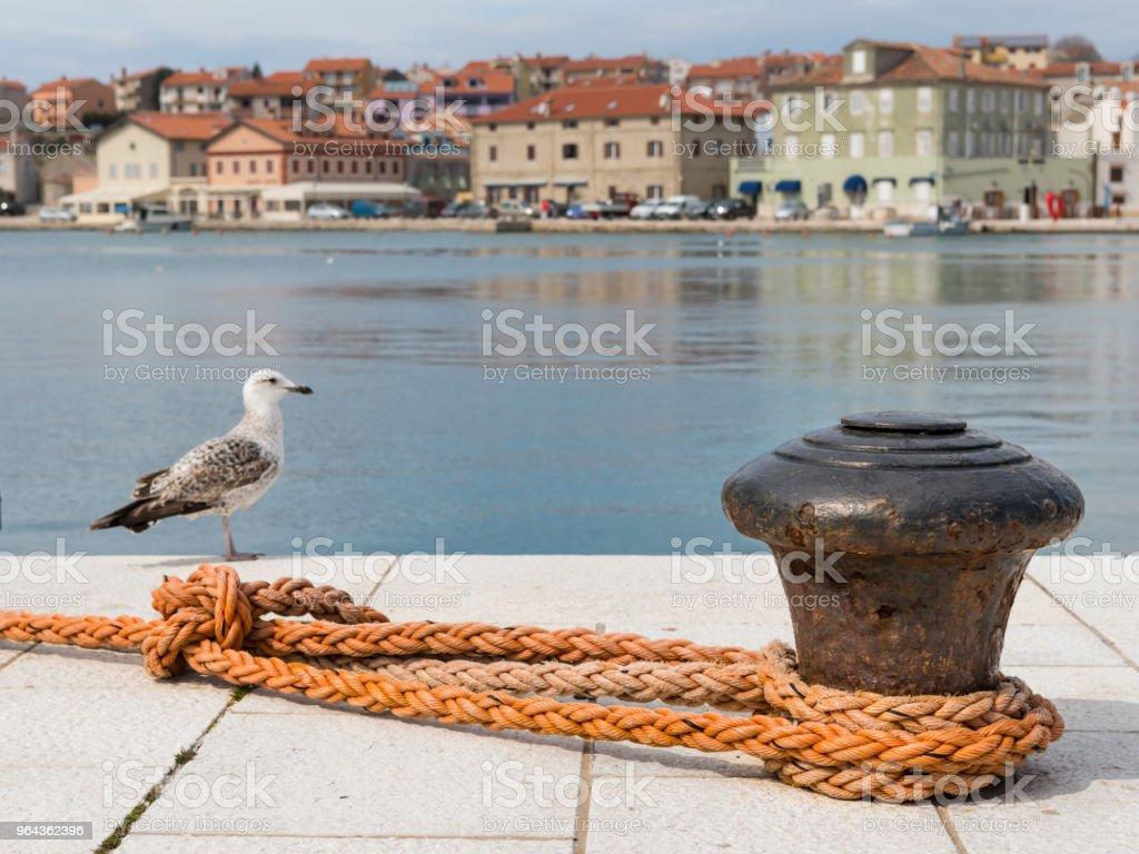 Amarração enferrujada, laranja orvalho e uma gaivota youg - Foto de stock de Ancorado royalty-free