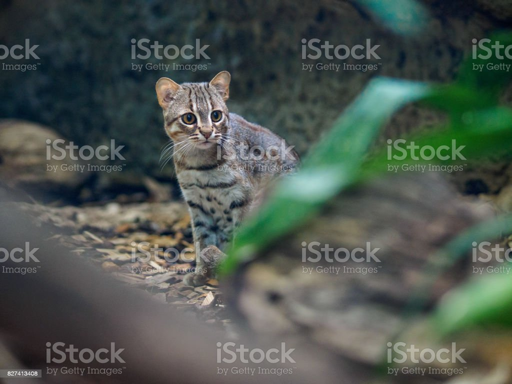Rusty cat in zoo stock photo
