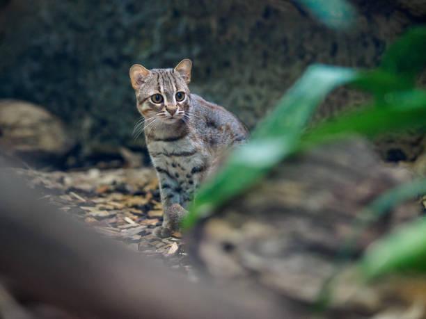 Rusty cat in zoo stock photo