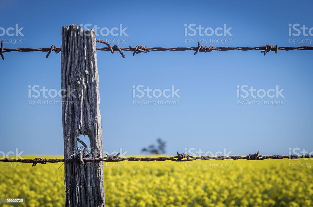 Rusty fence around canola field in Windermere stock photo