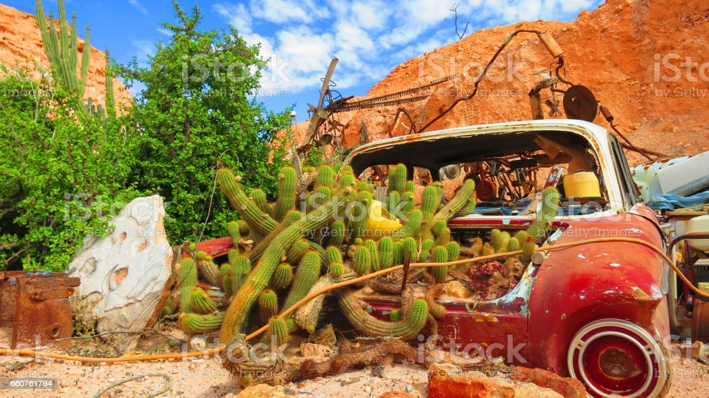 Rusty Garden - unique Wrecked and Abandoned classic vintage car with cactuses growing inside it near the Coober Pedy mining town off the Stuart Highway, Australia stock photo