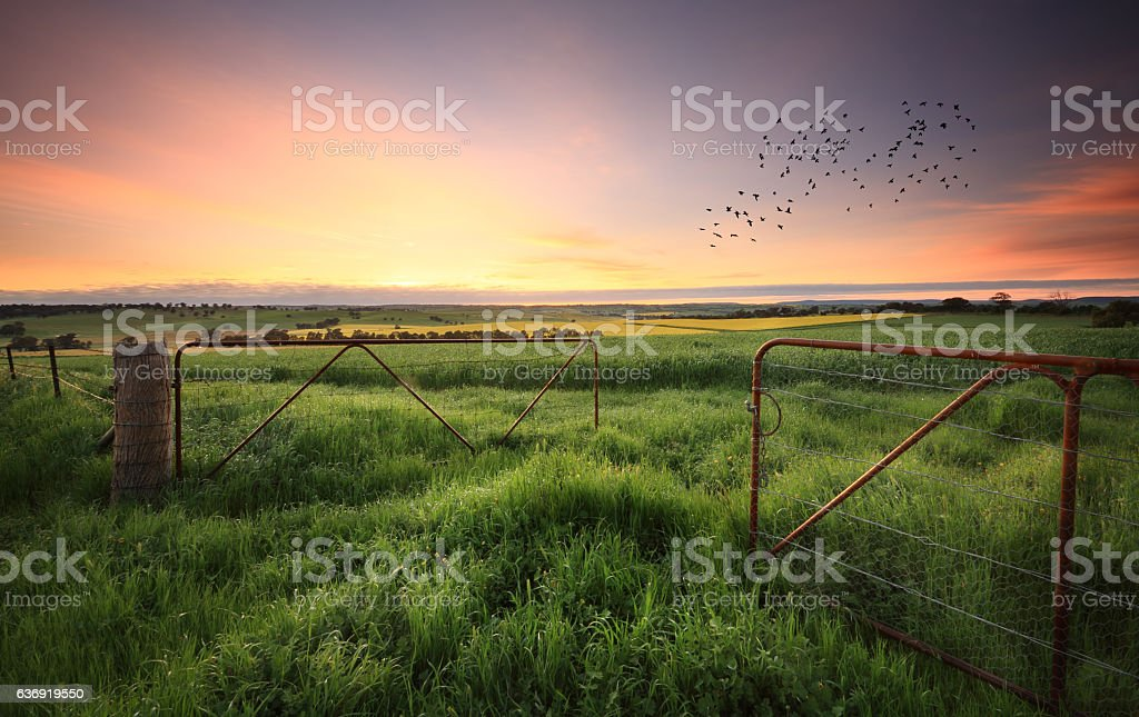 Rusty gates open to wheat and canola crops stock photo