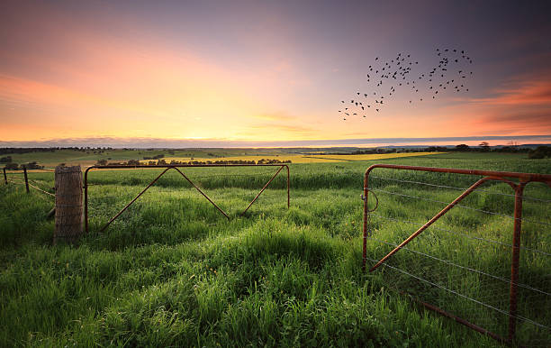 Rusty gates open to wheat and canola crops - foto de stock