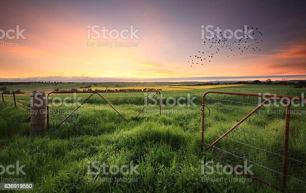 Photo of Rusty gates open to wheat and canola crops