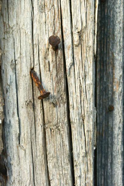 uñas oxidadas clavadas en madera vieja - foto de stock