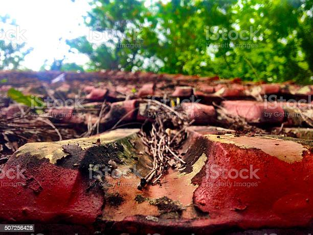 Photo of rusty red roof tile with blured background