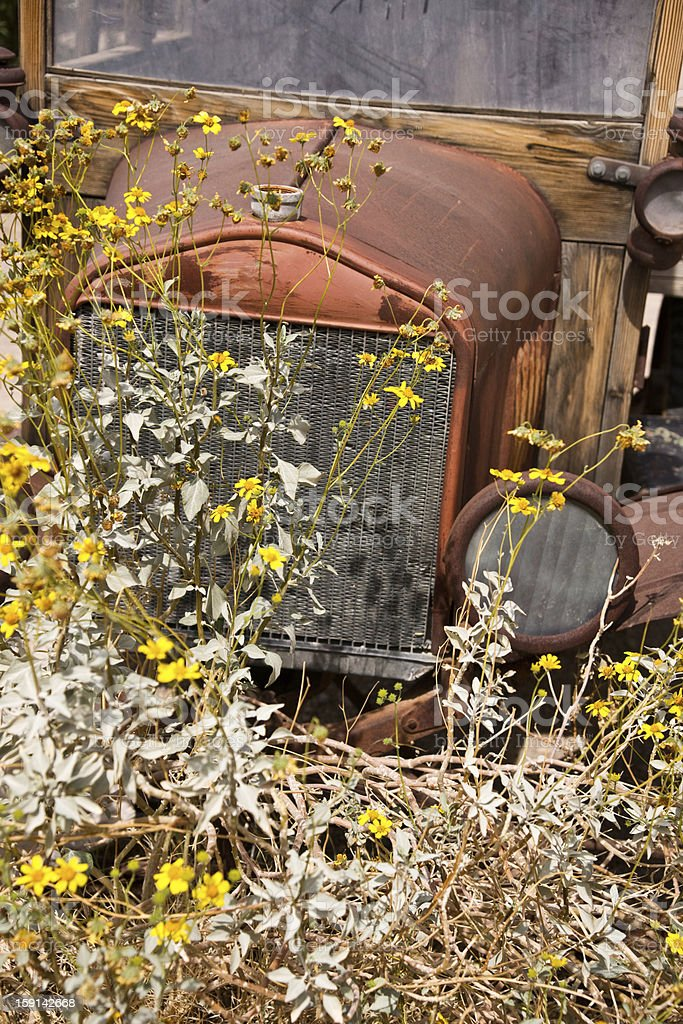 Rusty Vintage Truck in Flower Patch royalty-free stock photo