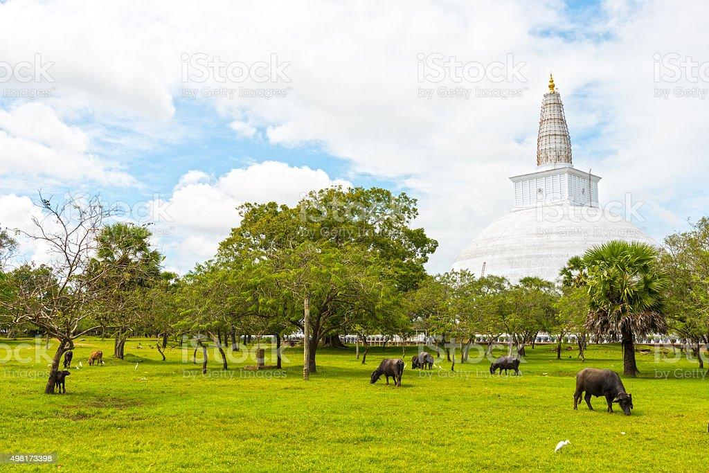 Dagoba blanc de Ruvanvelisaya dans d'Anuradhapura - Photo