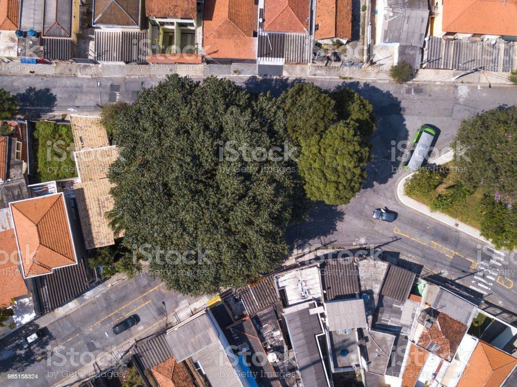 Árvore gigante na cidade - foto de acervo