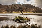 Rydal Tree - Rydal Water - Lake District