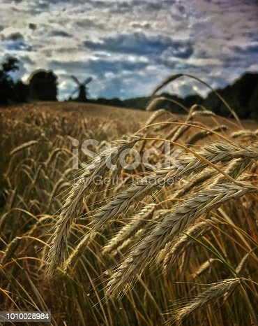 istock Rye and the windmill 1010028984